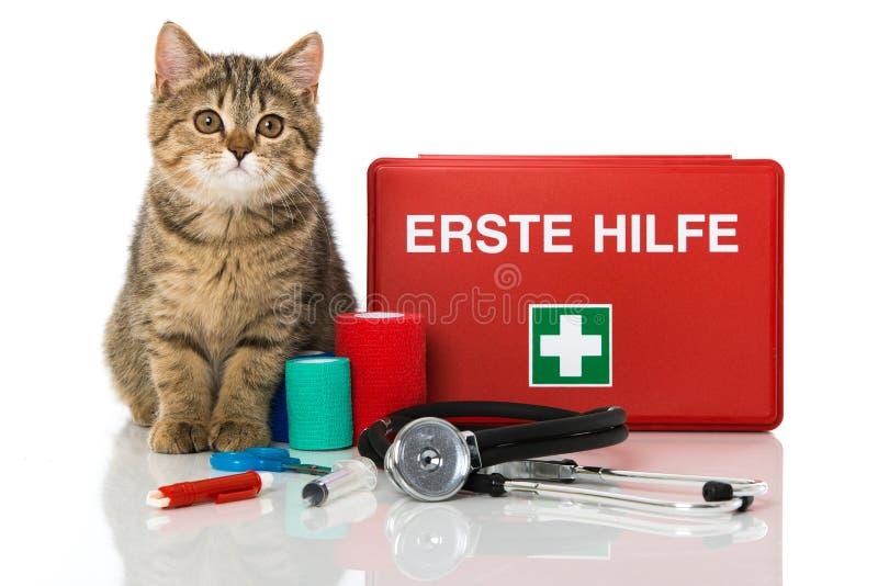 Gatinho do gato malhado com kit de primeiros socorros fotografia de stock royalty free