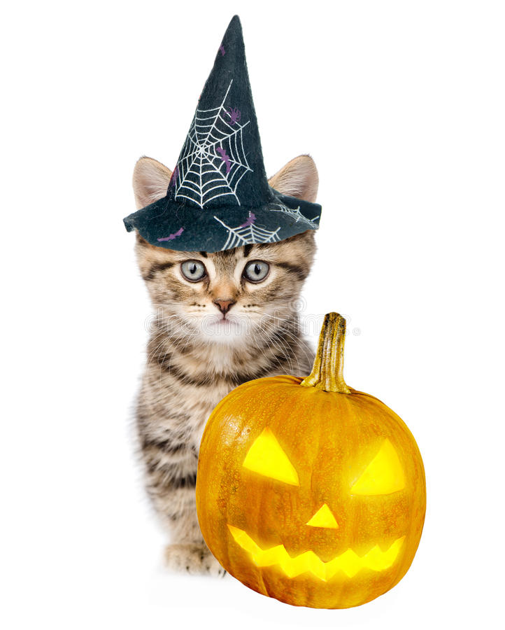 Gatinho do gato malhado com o chapéu para o Dia das Bruxas que senta-se perto da abóbora No branco fotos de stock royalty free