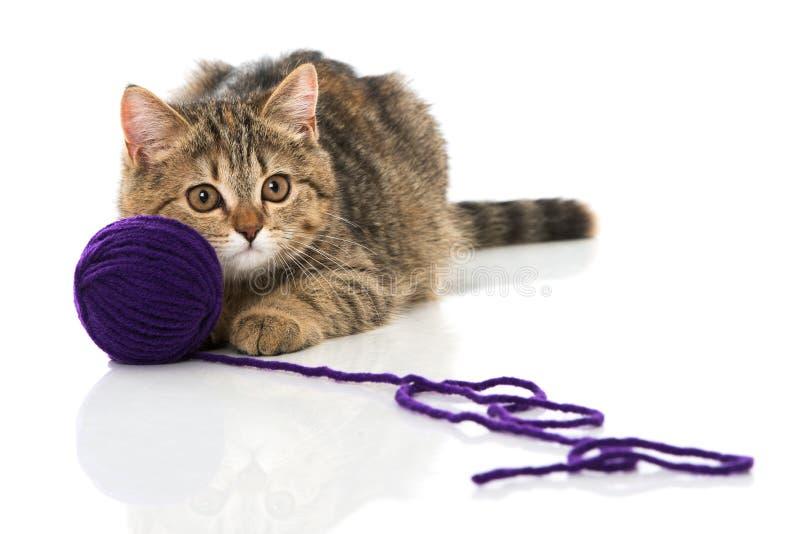 Gatinho do gato malhado que joga com lãs foto de stock royalty free