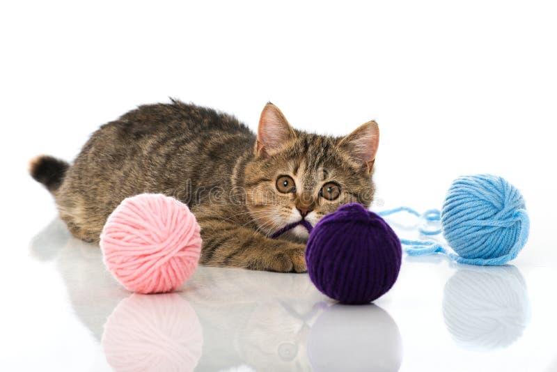 Gatinho do gato malhado que joga com lãs imagens de stock royalty free