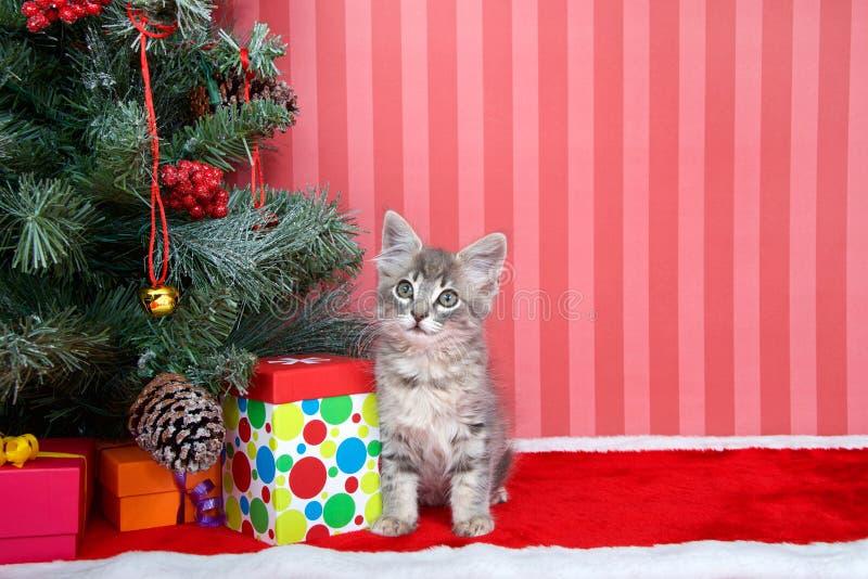 Gatinho do gato malhado sob a árvore de Natal foto de stock