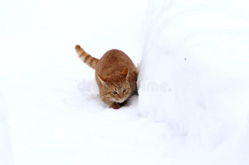 Gatinho do gengibre que esconde atrás de um monte de neve imagens de stock