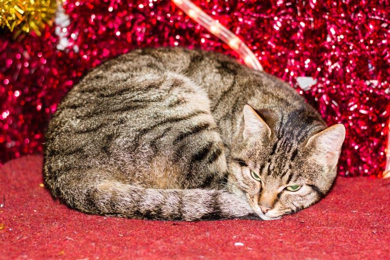 Gatinho do Natal com a decoração vermelha da luz de Natal foto de stock