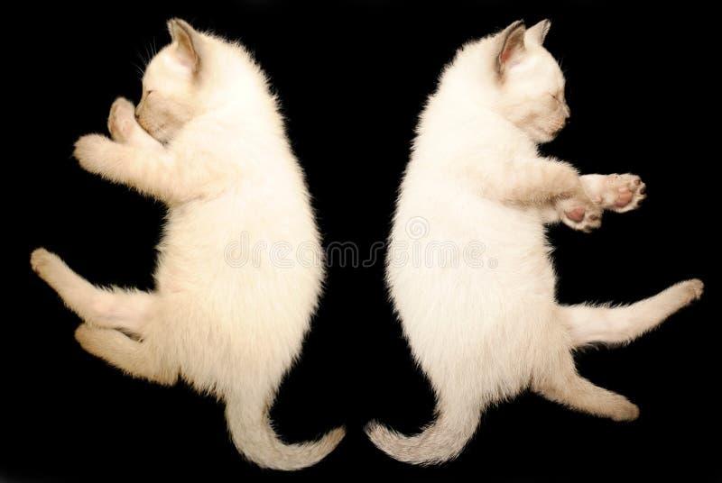 gatinho do sono 2 foto de stock royalty free