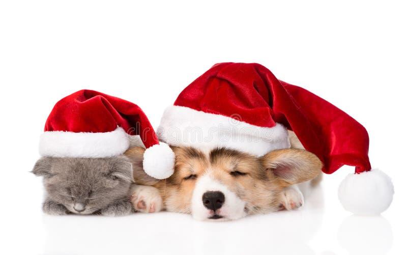 Gatinho do sono e cachorrinho de Pembroke Welsh Corgi com chapéu de Santa Isolado fotos de stock royalty free
