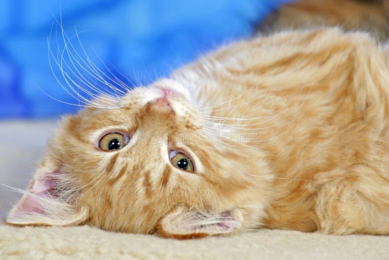 Gatinho doce do gato malhado foto de stock