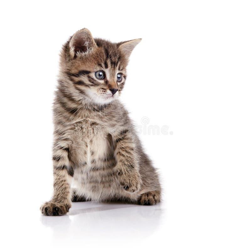 Gatinho doméstico pequeno bonito listrado imagem de stock royalty free
