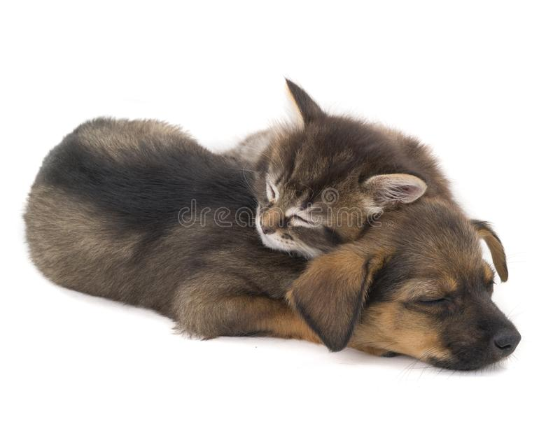 Gatinho e cachorrinho do sono imagens de stock