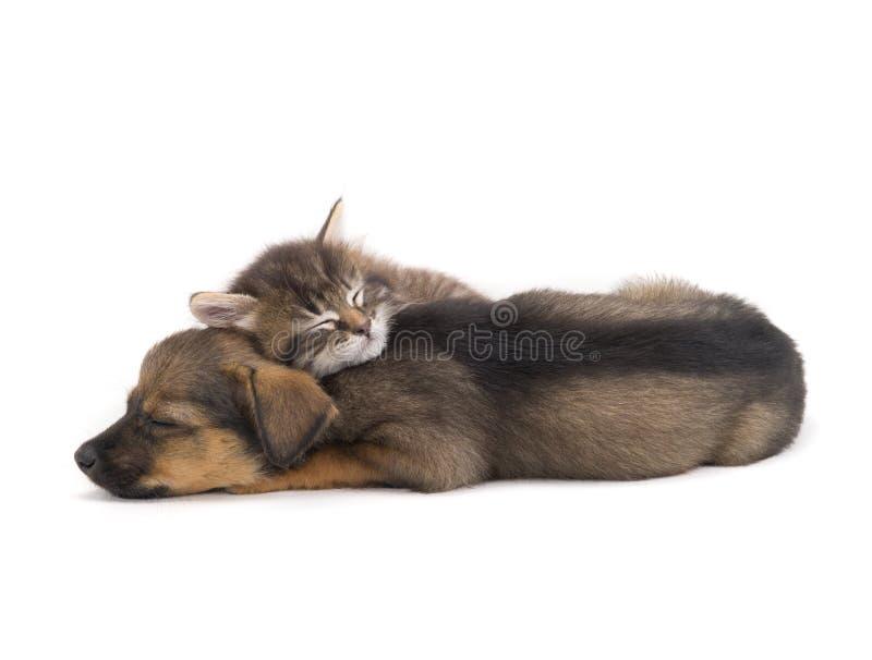 Gatinho e cachorrinho do sono fotos de stock royalty free
