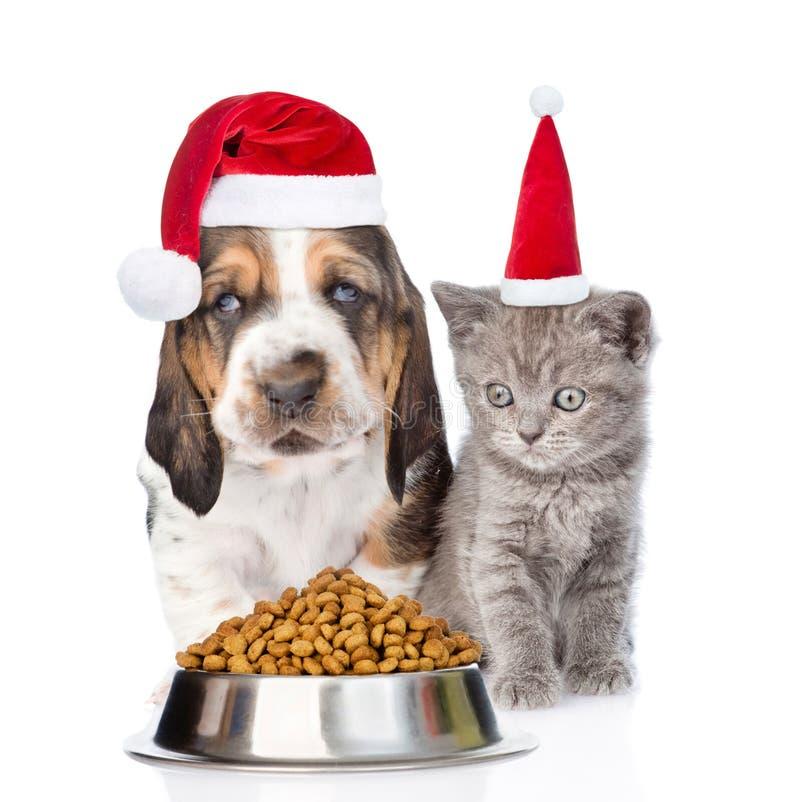 Gatinho e cachorrinho em chapéus vermelhos de Santa com a bacia de comida de gato seca No branco foto de stock royalty free