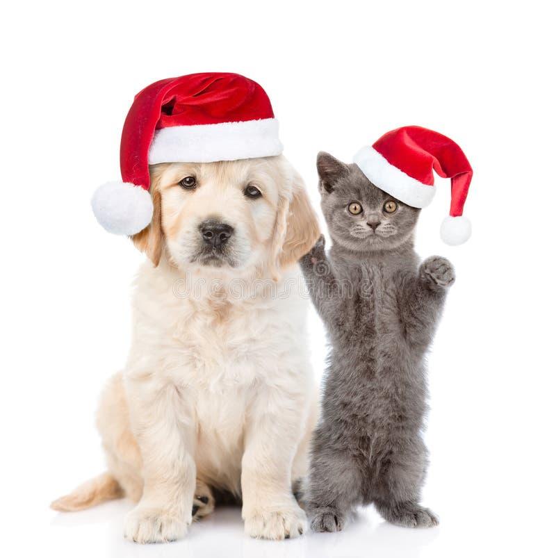 Gatinho e cachorrinho engra?ados do golden retriever em chap?us vermelhos do Natal junto Isolado no fundo branco fotografia de stock royalty free