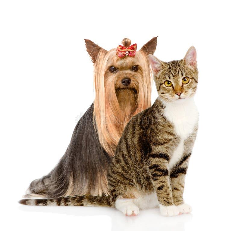 Gatinho e cachorrinho junto No fundo branco imagens de stock