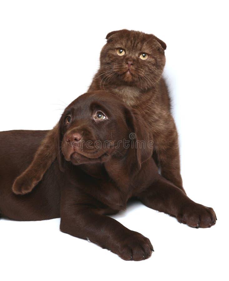Gatinho e filhote de cachorro em um fundo branco. fotos de stock