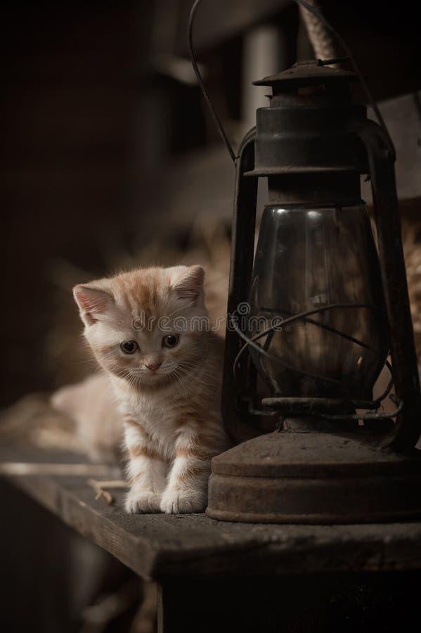 Gatinho e a lâmpada de querosene imagens de stock