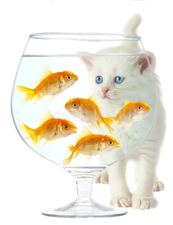 Gatinho e peixes fotografia de stock