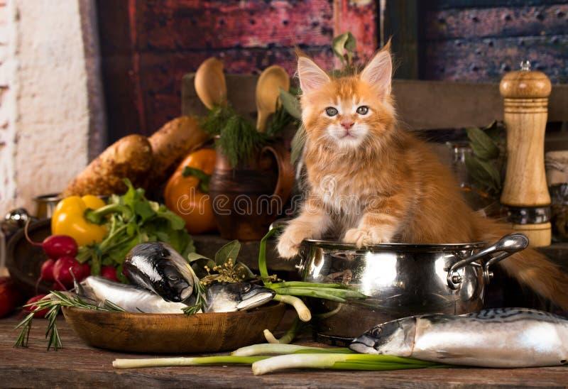 Gatinho e peixes frescos na cozinha foto de stock