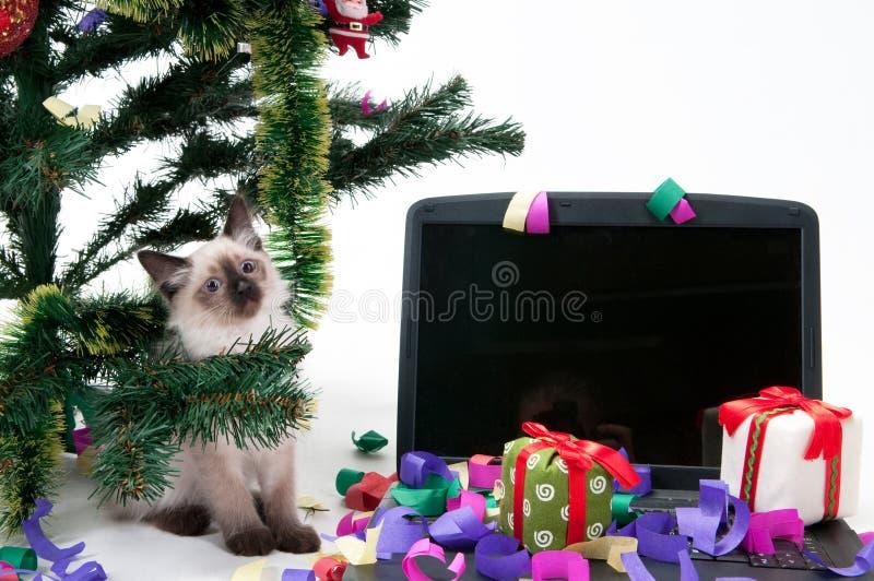 Gatinho e portátil sob a árvore foto de stock