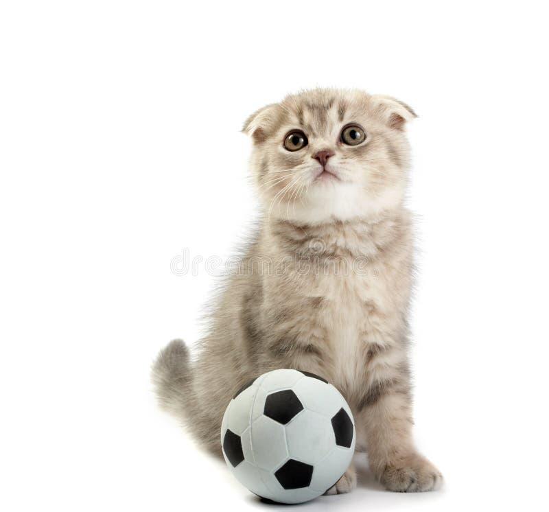 Gatinho e um futebol imagens de stock