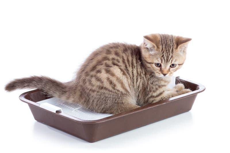 Gatinho engraçado do gato que senta-se em um toalete dos gatos no branco fotografia de stock