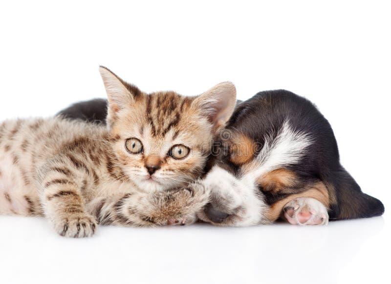 Gatinho engraçado que encontra-se com o cachorrinho do cão de basset do sono Isolado fotos de stock royalty free
