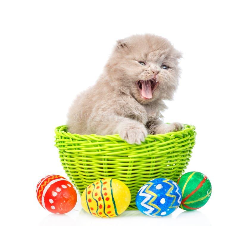Gatinho engraçado que senta-se na cesta com ovos da páscoa Isolado no branco foto de stock royalty free