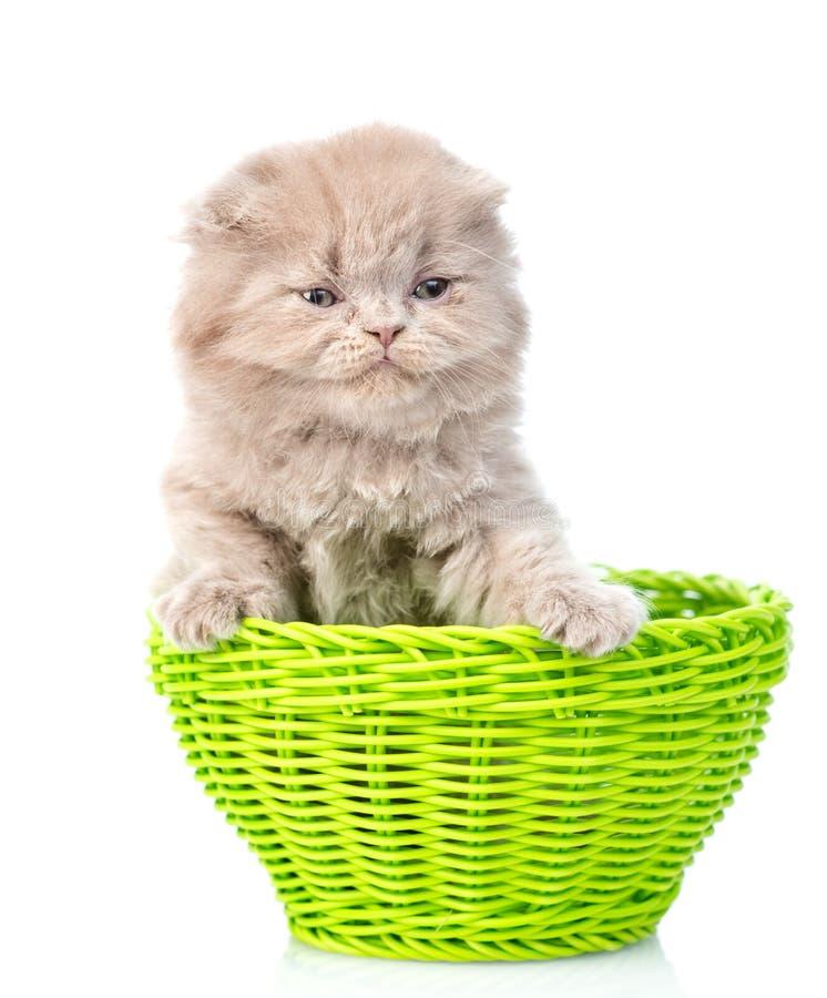 Gatinho engraçado que senta-se na cesta verde Isolado no fundo branco foto de stock