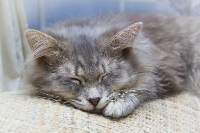 Gatinho listrado cinzento do sono imagem de stock