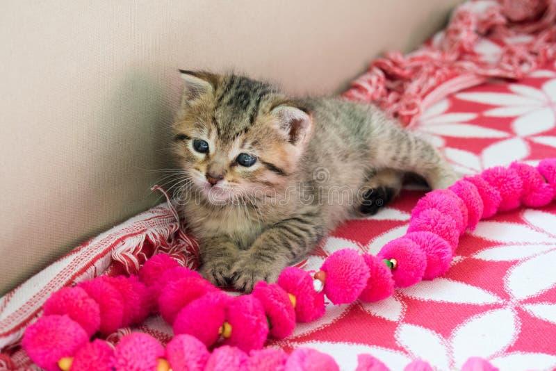 Gatinho listrado na cobertura, vaquinha pequena bonito do tigre de 3 semanas com olhos azuis fotos de stock