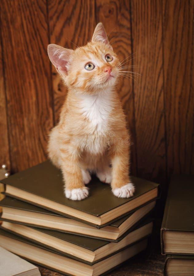 Gatinho listrado que senta-se em livros foto de stock royalty free
