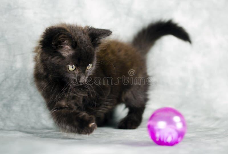 Gatinho longo preto do cabelo que joga com bola cor-de-rosa imagem de stock royalty free
