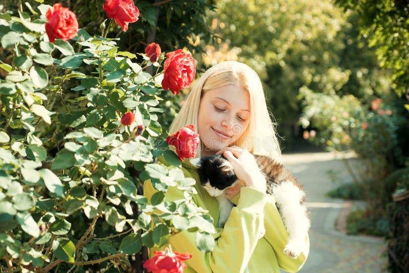 Gatinho macio Aprecie a esta??o do outono O outono est? aqui A mulher bonita leva o animal do gato Fundo da natureza de animais d foto de stock royalty free