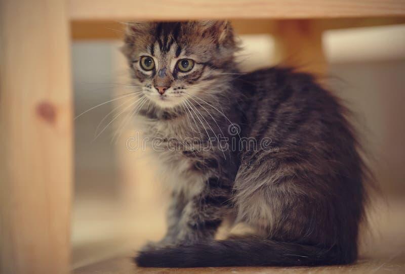 Gatinho macio listrado cinzento foto de stock