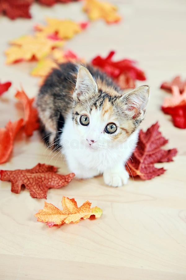 Gatinho nas folhas de outono foto de stock