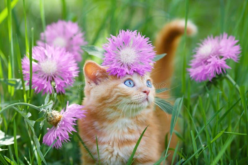Gatinho no prado da flor fotografia de stock royalty free