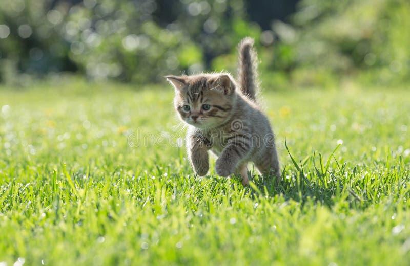 Gatinho novo que salta ou que corre na grama verde fotografia de stock