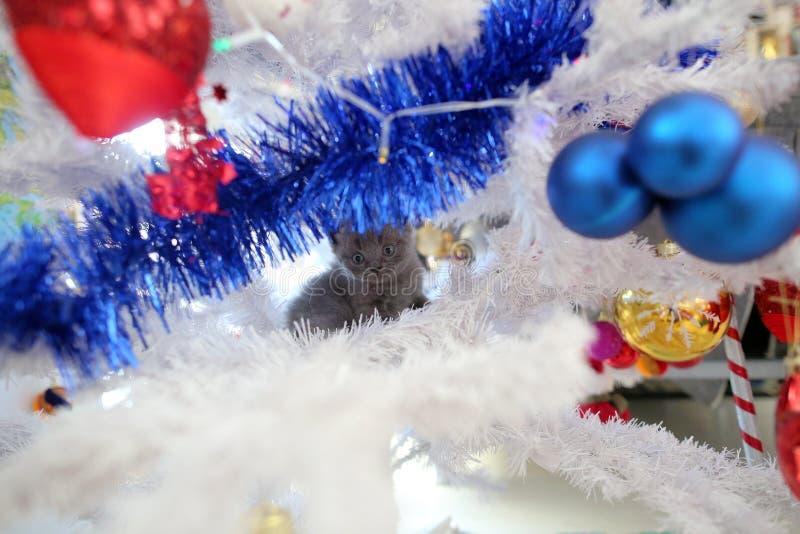 Gatinho pequeno acima em uma árvore de Natal fotos de stock royalty free
