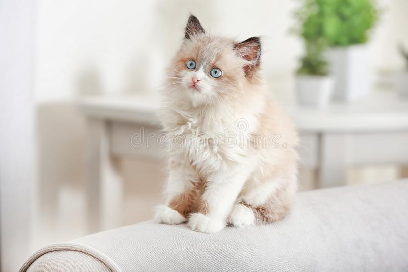 Gatinho pequeno bonito no sofá foto de stock royalty free