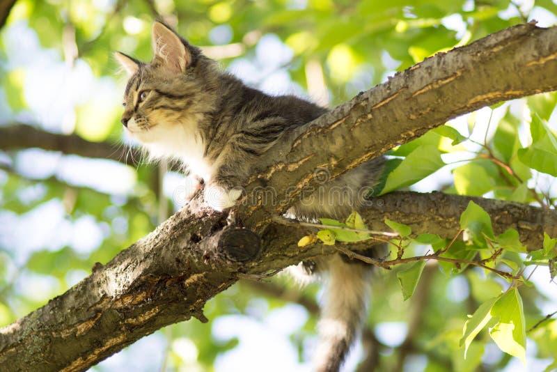 Gatinho pequeno bonito que encontra-se em um ramo de árvore imagem de stock royalty free