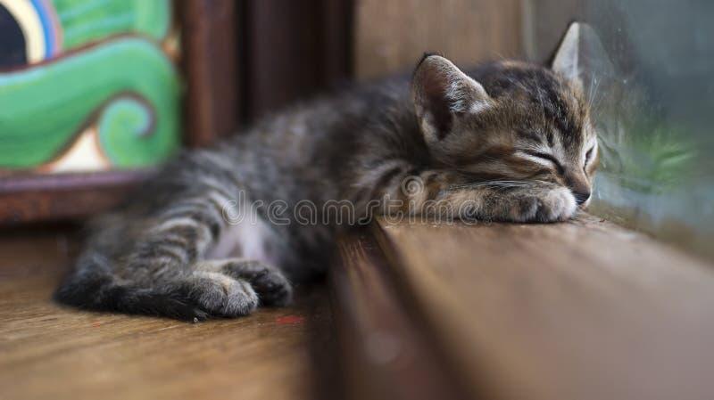 Gatinho pequeno bonito que encontra-se no peitoril da janela com reflexão fotos de stock royalty free