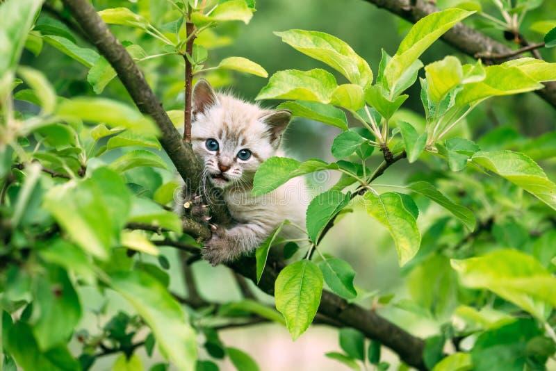 Gatinho pequeno com os sim azuis na árvore imagens de stock royalty free