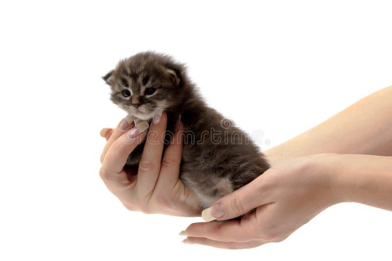 Gatinho pequeno em uma mão imagem de stock