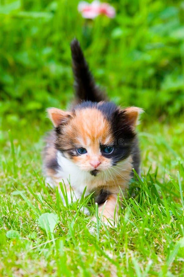 Gatinho pequeno na grama fotografia de stock