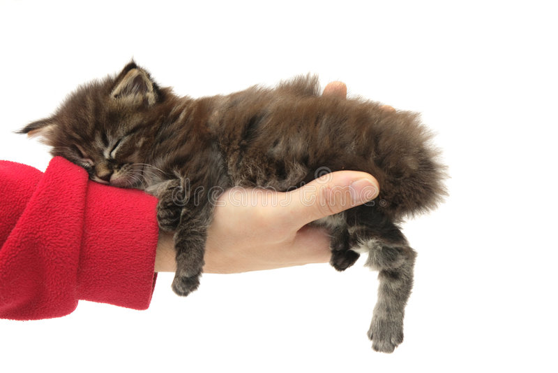 Gatinho pequeno que dorme em uma mão imagem de stock
