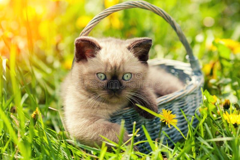Gatinho pequeno que senta-se em uma cesta fotografia de stock