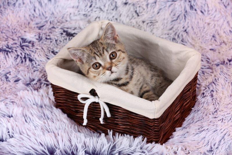 Gatinho pequeno que senta-se em uma cesta imagem de stock