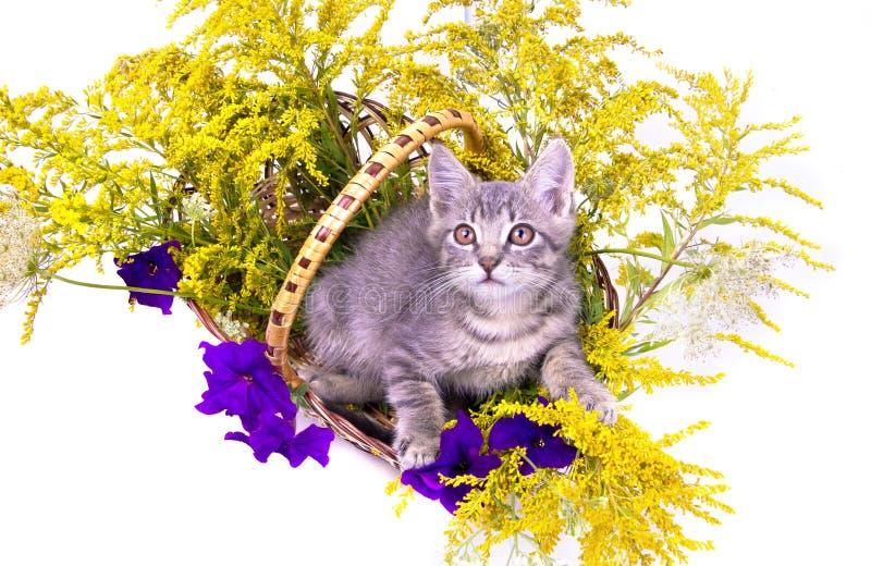 Gatinho pequeno que senta-se na cesta com flores foto de stock
