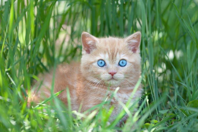 Gatinho pequeno que senta-se na grama fotografia de stock