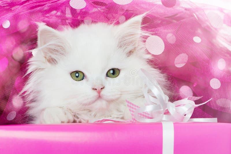 Gatinho persa que encontra-se em um presente cor-de-rosa fotografia de stock royalty free