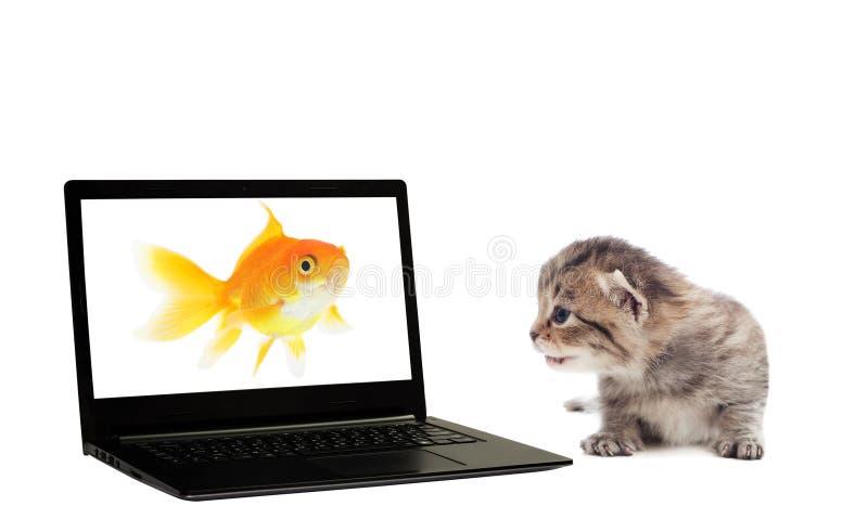 Gatinho, portátil e peixe dourado fotografia de stock