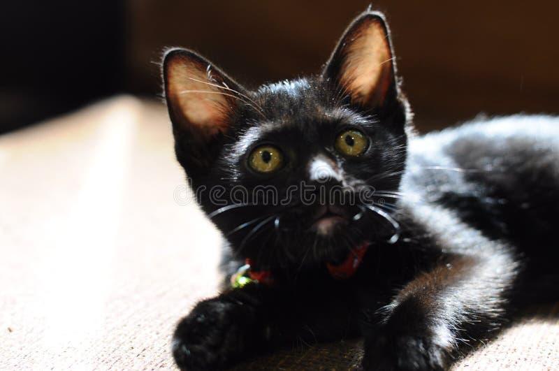 Gatinho preto com olhos verdes fotografia de stock